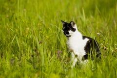 Cat black and white. Stock Photo