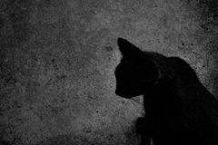 Cat in black and white halloween Stock Photos