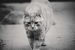 A cat in black&white stock photos