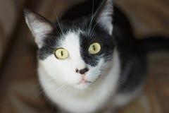 Cat black and white Stock Photos