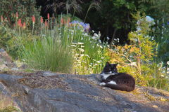 Cat. Black and white cat on a rock in a garden Stock Photography
