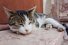 The cat. black and white stray cat.  royalty free stock photos