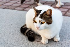 The cat. black and white stray cat.  stock photos