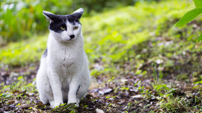 Cat in black and white, watching the forest. Black and white cat watching forest Stock Photography