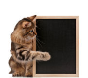 Cat with blackboard Royalty Free Stock Photos