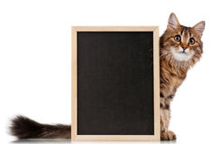 Cat with blackboard Royalty Free Stock Image