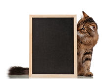 Cat with blackboard Royalty Free Stock Photo