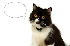 Cat with blank bubble Royalty Free Stock Photography