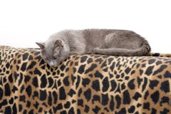 Cat on blanket stock images