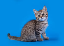 Cat  on blue background Stock Images