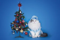 Cat in a blue dress and hat on a blue background Stock Image