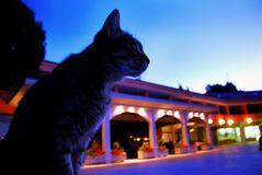 Cat in blue early morning. Cat sitting on small urban square in blue early morning Stock Photo