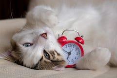 Cat. Blue Eyed Cat; Cute Cat Stock Images