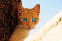 Cat with blue eyes. Lovely cat  on the tree Stock Photos