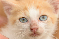 Cat blue eyes Stock Photo