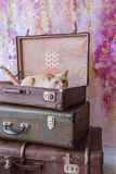 Cat with blue eyes sits inside vintage suitcases. Thai white with red marks cat with blue eyes sits inside vintage suitcases on a pink background toned picture Stock Photography
