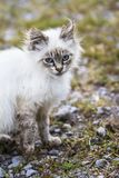 Beautiful young cat sits for a portrait, while the wind wisps its fur Stock Photos