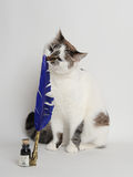 Cat with blue quill pen and ink. White cat with blue quill pen and ink Royalty Free Stock Image