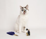 Cat with blue quill pen and ink. White cat with blue quill pen and ink Stock Photos