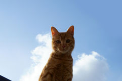 Cat in blue sky. I am looking at me on the garage Stock Photo