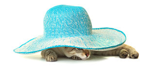 Cat in blue straw hat. Royalty Free Stock Images