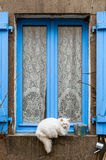 The cat on the blue window Stock Photos