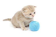 Cat and blue wool ball Stock Photography