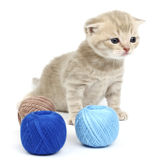 Cat and blue wool ball Royalty Free Stock Image