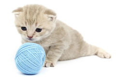 Cat and blue wool ball. On white Royalty Free Stock Photos