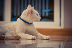 Cat. Blue and yellow eyed Cat Royalty Free Stock Photos