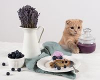 Cat with blueberry jam in jar, cut of blueberry homemade cake with ice cream ball and lavender bouquet on white background royalty free stock photography