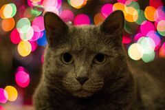 Cat with blurred background Stock Photo
