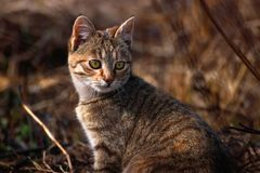 Cat with blurry background, cat with green eyes royalty free stock photos