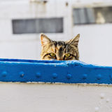 Cat On Board Royalty Free Stock Image