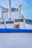 Cat On Board. Of Small Fishing Boat Stock Photo