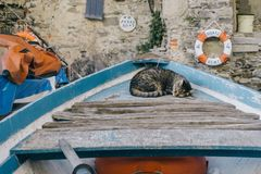 Sleeping. A cat on a boat Royalty Free Stock Image