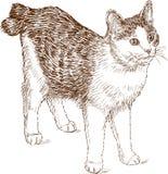 Cat bobtail Royalty Free Stock Photos