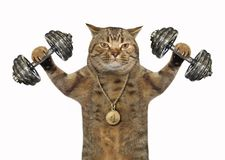 Cat bodybuilder with dumbbells royalty free stock image