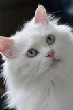 CAT BONITO Fotos de Stock
