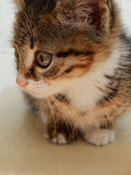 CAT bonito, alta resolução, animais Foto de Stock