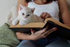 Cat on the book Stock Photography