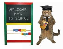 Cat with a book near a blackboard stock images