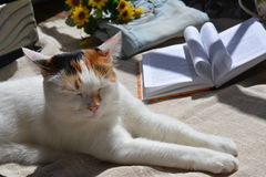 Cat and book Stock Image