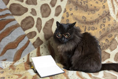 Cat and book Stock Images
