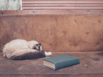 Cat and book on sofa Royalty Free Stock Photo