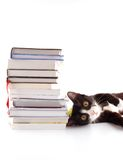 Cat with books Stock Images