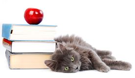Cat with books. Long haired kitten laying with books Royalty Free Stock Photos