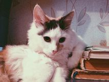 Cat and Books Stock Photography