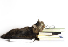 Cat on Books. A brown tabby cat laying down and resting chin on books, reading glasses on top of books, background is white stock photo