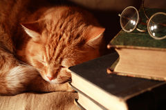 Cat And Books Stock Images